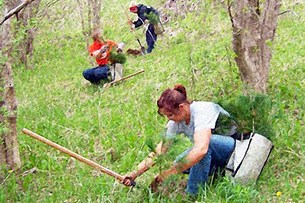Ausable Bayfield Conservation is looking for tree planters.