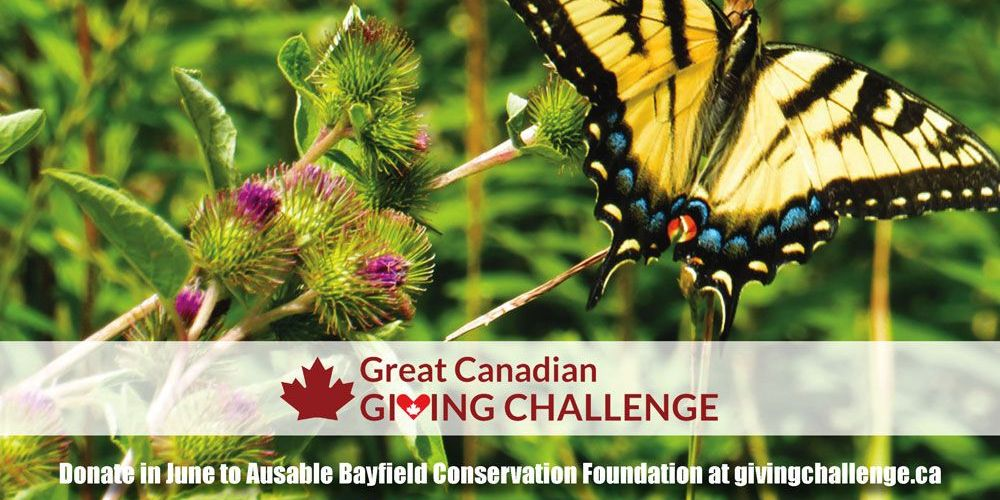 Donate to ABCF at givingchallenge.ca in June to make a bigger difference.